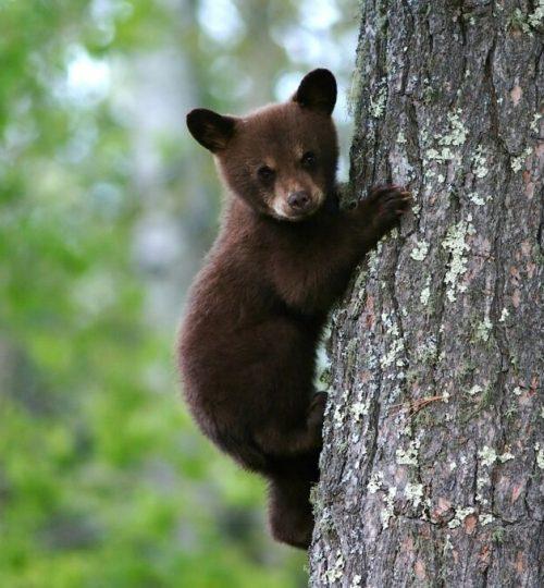 bear-79838_1280-1024x678